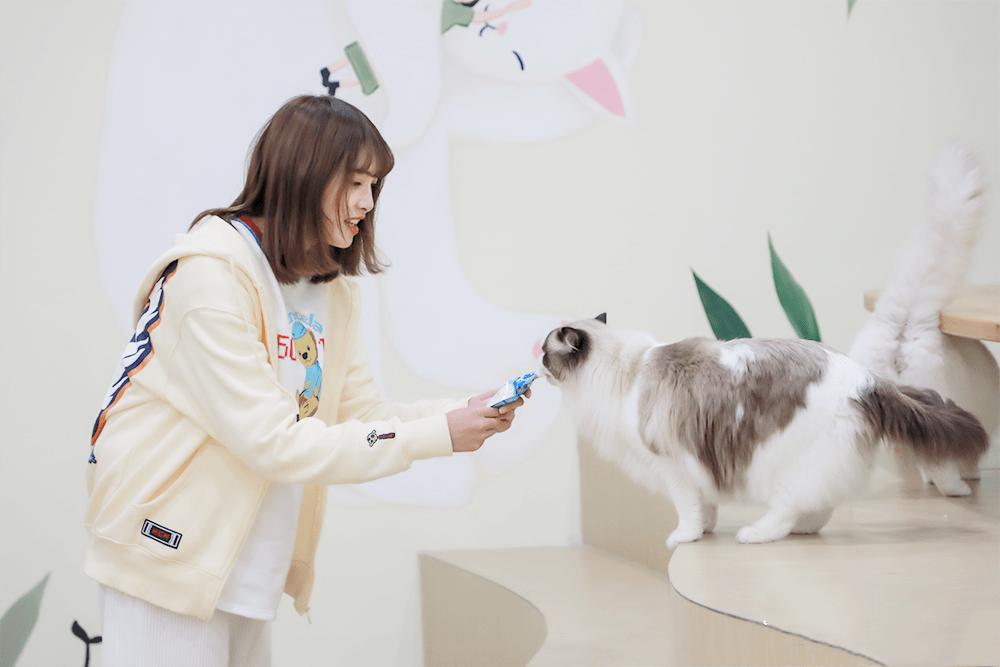 2021国内首个沉浸式猫咪博物馆《参见猫大人》-昆明站