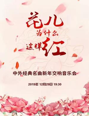 花兒為什么這樣紅北京音樂會